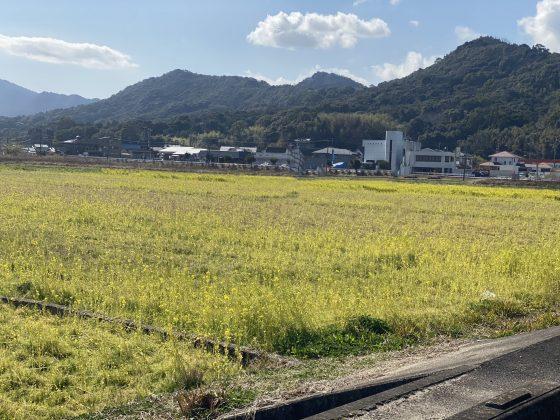 松島菜の花畑